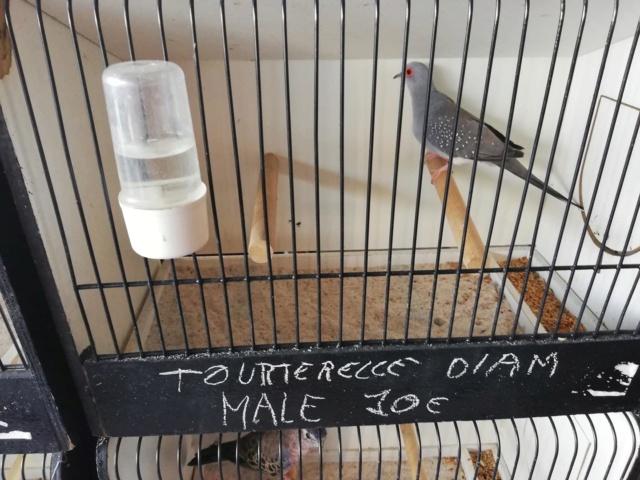 bourse d oiseaux à Seraing 42857410