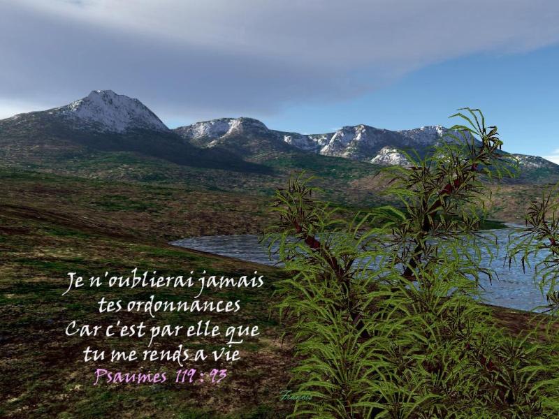 Suivre le bon Berger... Psaume35