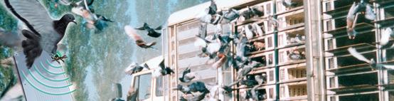palomas mensajeras loft