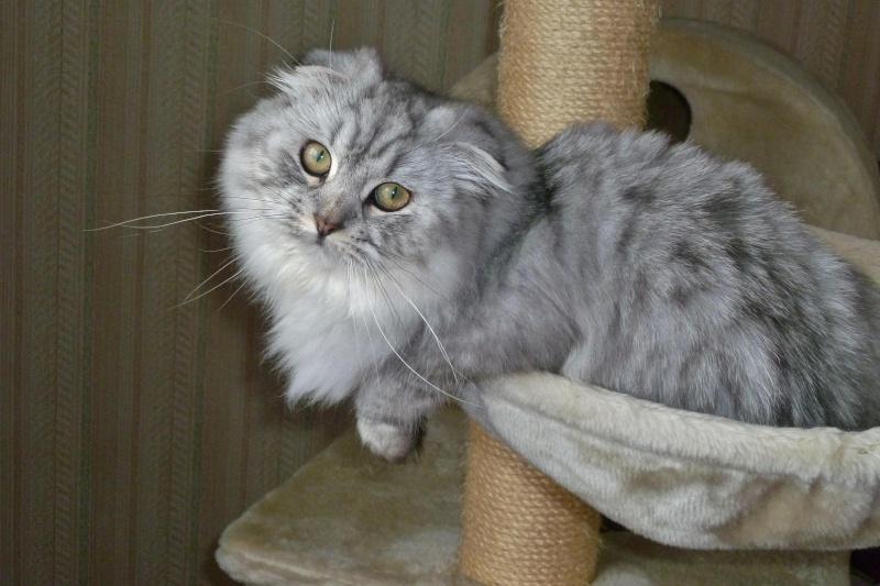 Gwendy Stéphys cat's : ma petite nouvelle Gwend106