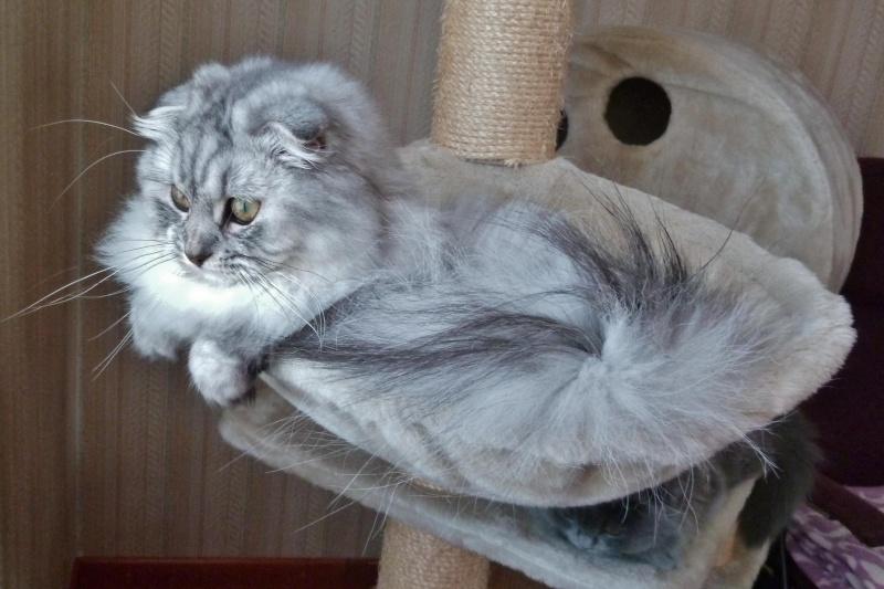 Gwendy Stéphys cat's : ma petite nouvelle Gwend108