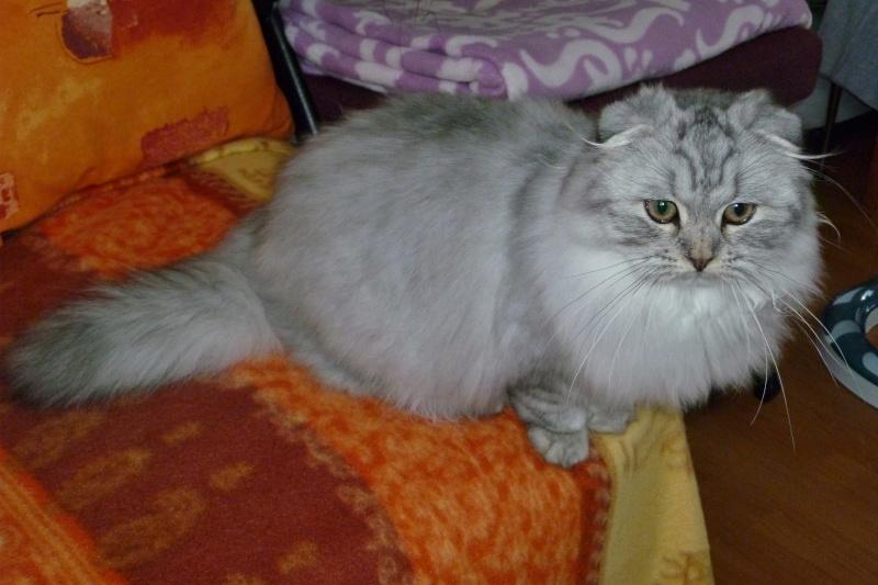 Gwendy Stéphys cat's : ma petite nouvelle Gwendy74