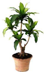 Au bon vouloir!!! Plants10