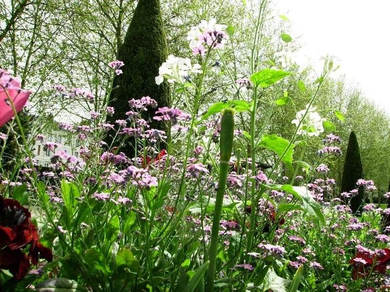Thème du mois de Mai 'Le renouveau du printemps' Pict0230