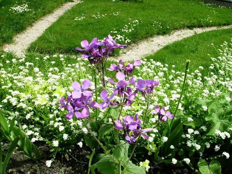 Thème du mois de Mai 'Le renouveau du printemps' Pict0231