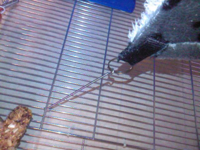 toit de cage Sp_a2113