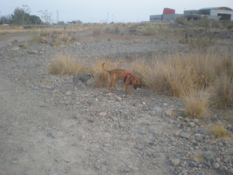 Mis perros: LUKI Y RAY 1_desc10