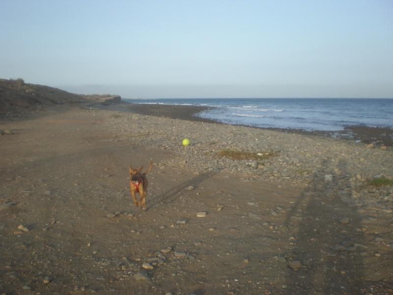 Mis perros: LUKI Y RAY 28_pla10