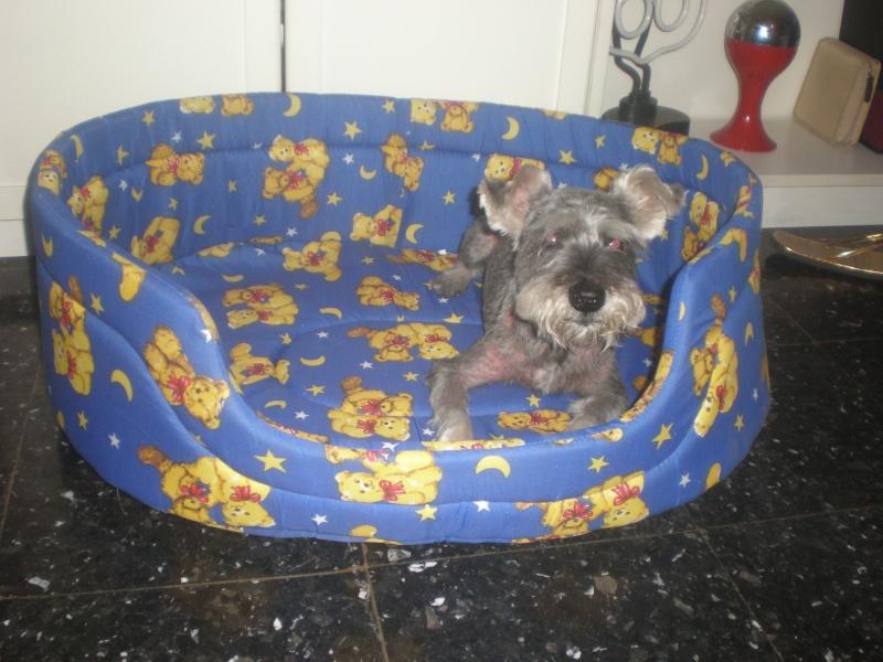 Mis perros: LUKI Y RAY 5_cama10