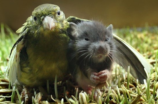 Unusual Animal Friendship Birdmo10