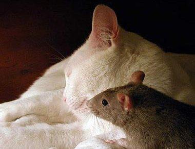Unusual Animal Friendship Cat-mo10