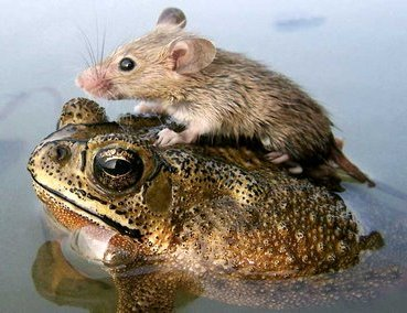 Unusual Animal Friendship Frogan10