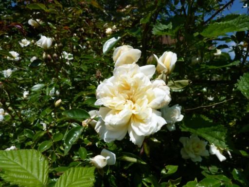 les plantes et graines de claudinette - Page 2 Fleurs91