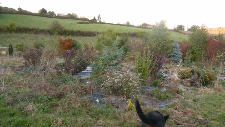 Je fais quoi au jardin? - Page 21 Le_ja303