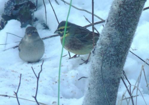 quel est cet oiseau???? Le_ja564