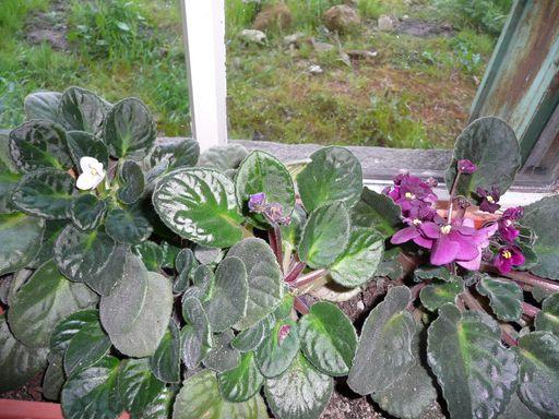 plante d'interieur P1010120