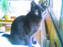 Hyperthyroïdie chez le chat - Page 5 Cam00010