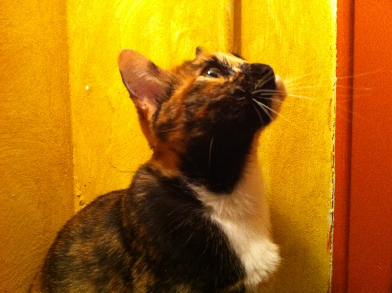 FICELLE et YUMI (Nosy Be) - Page 4 Img_0715