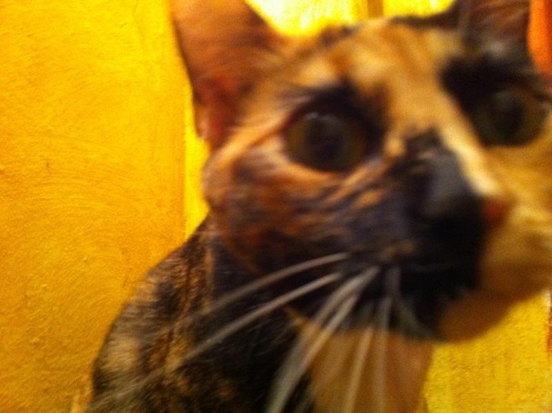 FICELLE et YUMI (Nosy Be) - Page 4 Img_0716