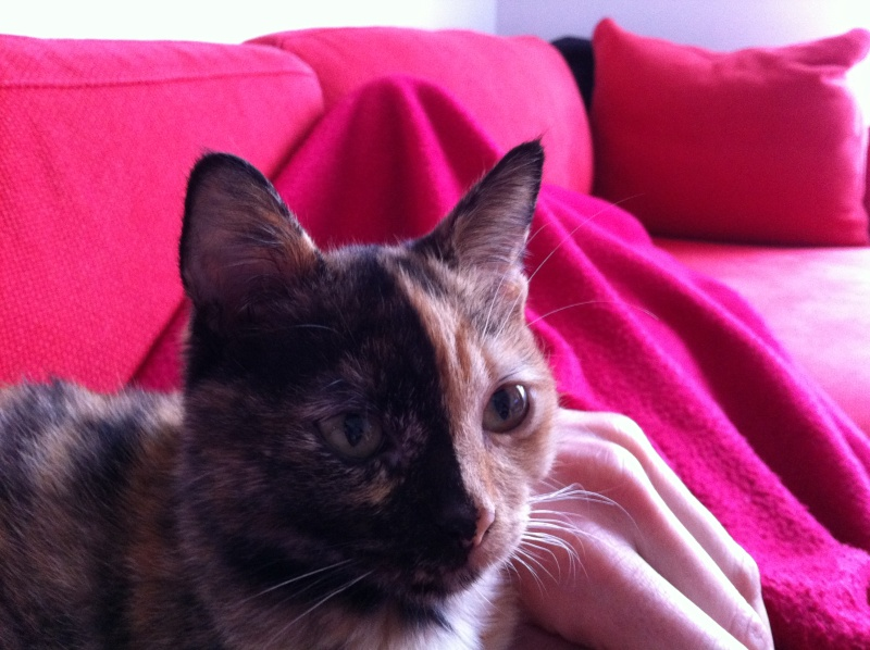 FICELLE et YUMI (Nosy Be) - Page 5 Img_0819
