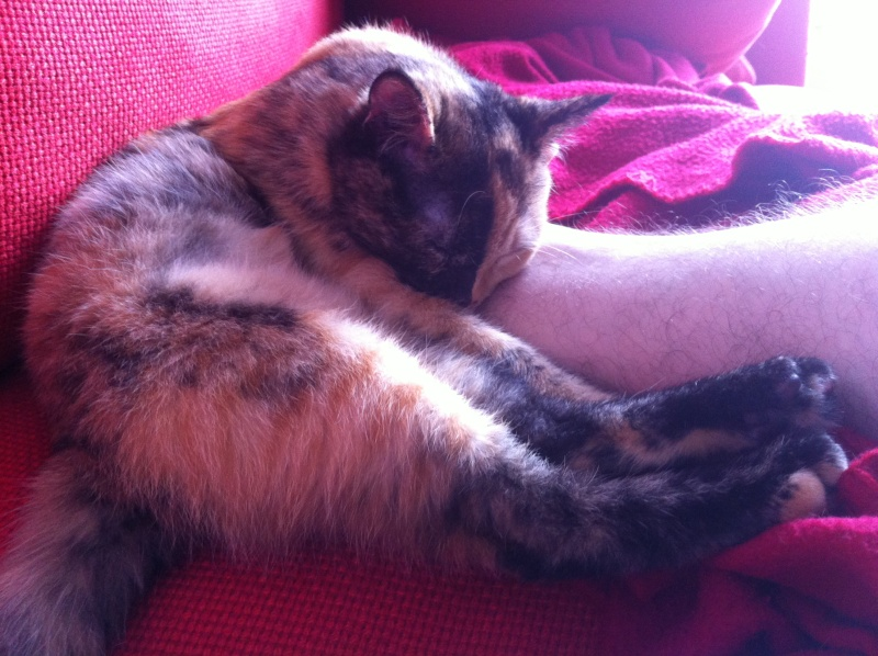 FICELLE et YUMI (Nosy Be) - Page 6 Img_0917