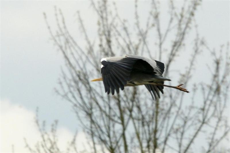 sortie photos Peronne, les photos Heron_10