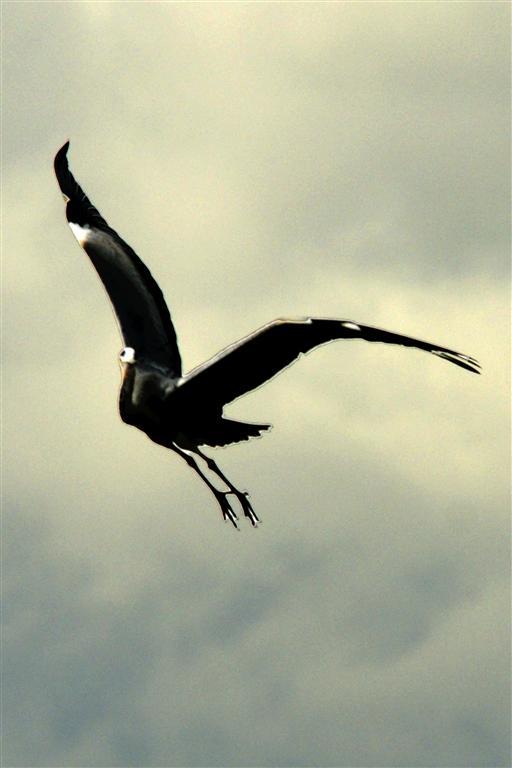 sortie photos Peronne, les photos Heron_11