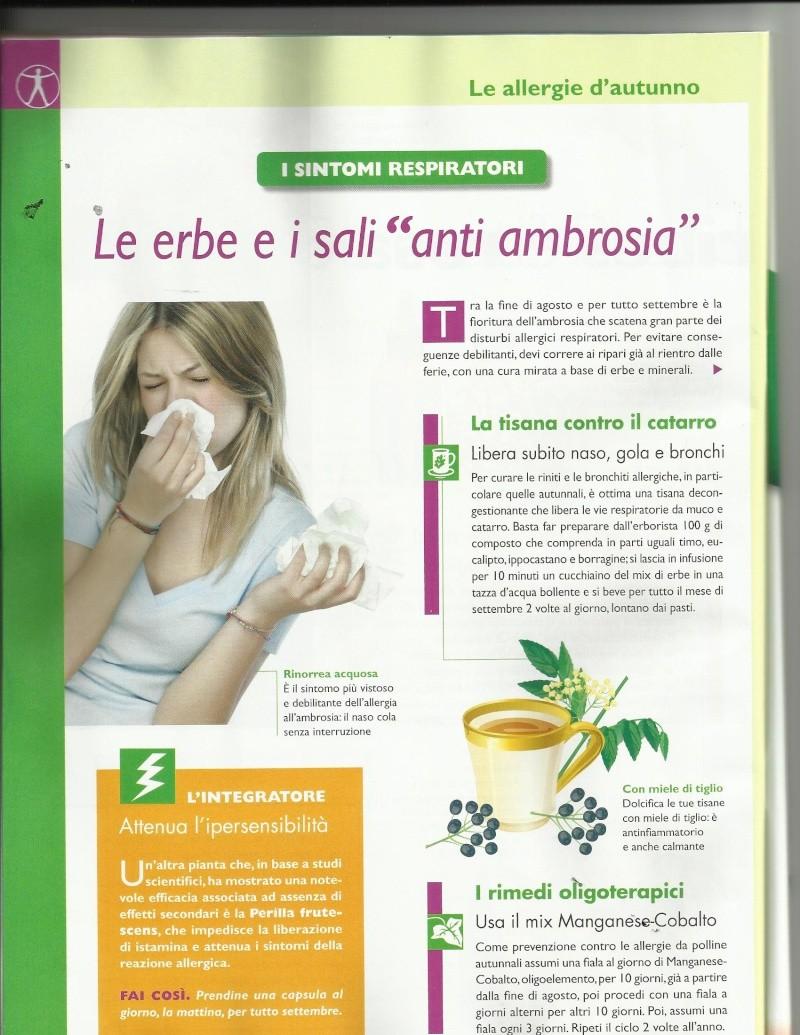 Ambrosia allergia Ambros10