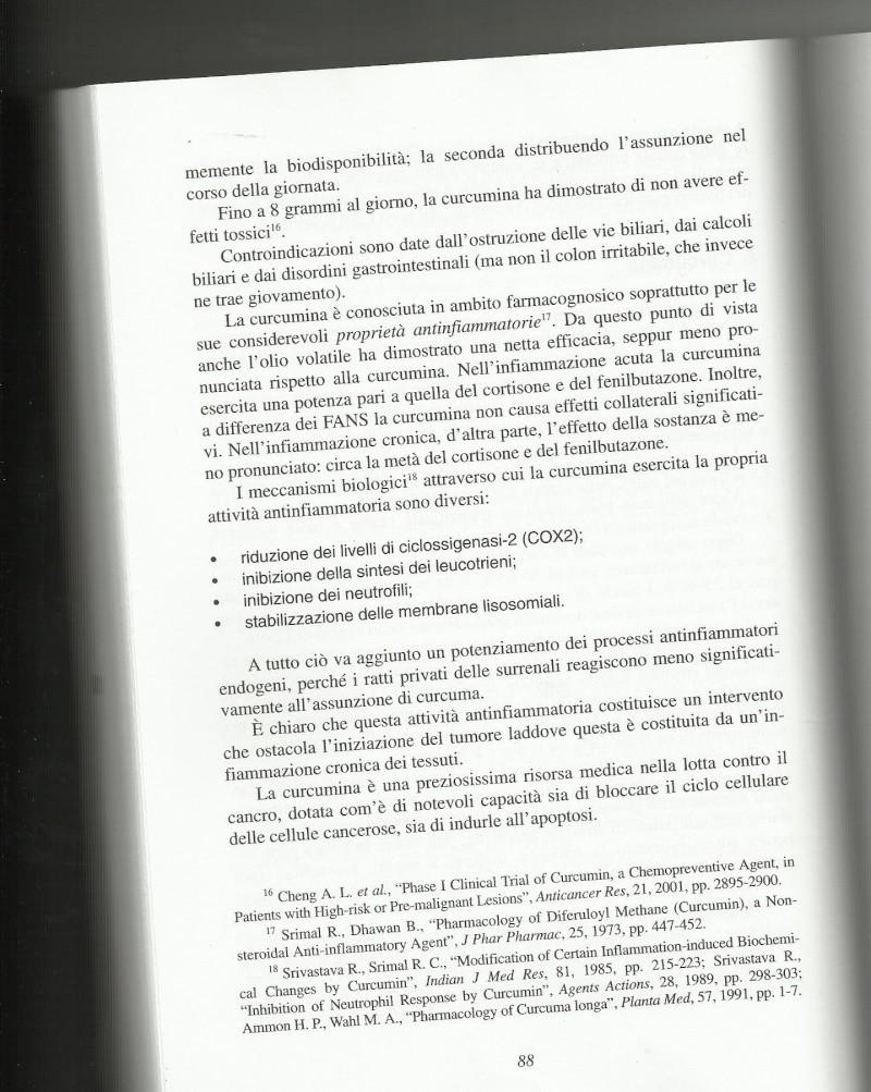 CURCUMA, la più speciale delle spezie!!!! - Pagina 2 Curcum12