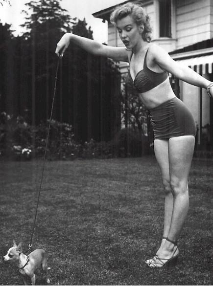 Marilyn Monroe Mmdog510