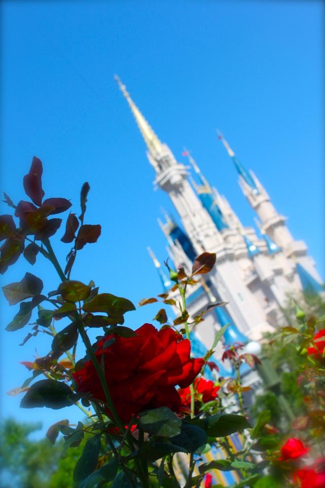 FLORIDA DREAM ! Un séjour inoubliable ! Img_3716