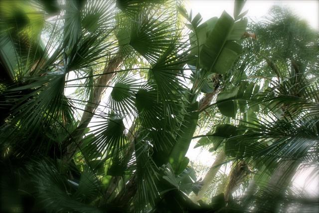FLORIDA DREAM ! Un séjour inoubliable ! Img_4211