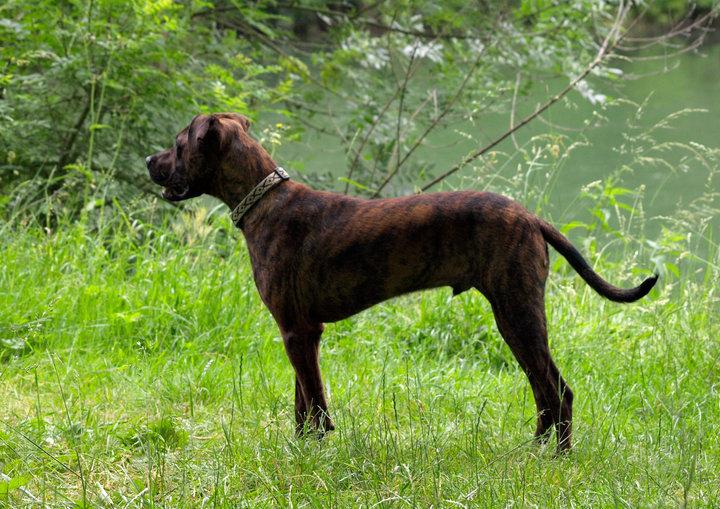 SEIKO mâle 2 ans x boxer 10061011