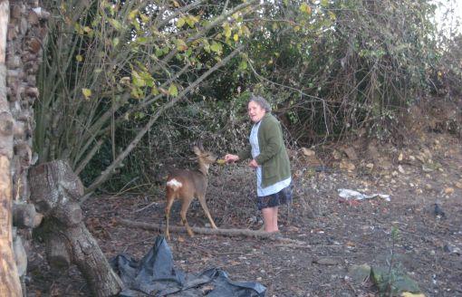 Mobilisés pour garder Bambi 10721410
