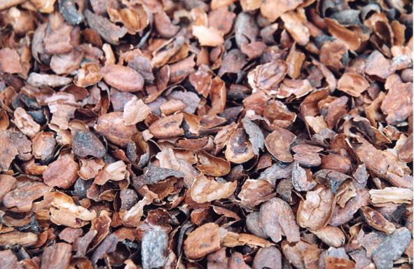 le chocolat/ coques de cacao = danger pour les chiens Copoca11