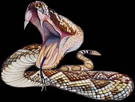 V_S !! venomous snake\'s !! V_S
