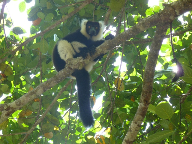 "Parc "" IVOLOINA ""  Madagascar P1010112"