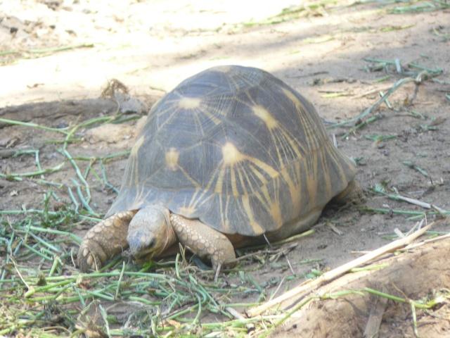 "Parc "" IVOLOINA ""  Madagascar P1010114"