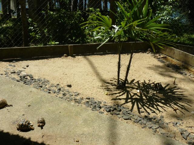 "Parc "" IVOLOINA ""  Madagascar P1010122"