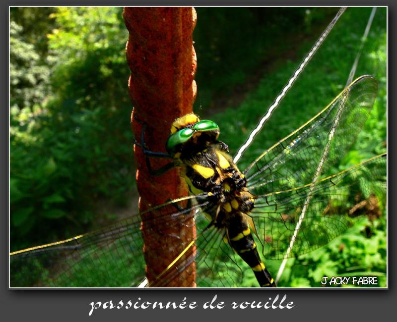 Rouille et corrosion Passio10