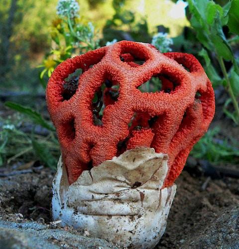 quelle est cette drôle de plante de la forêt merci 15419810