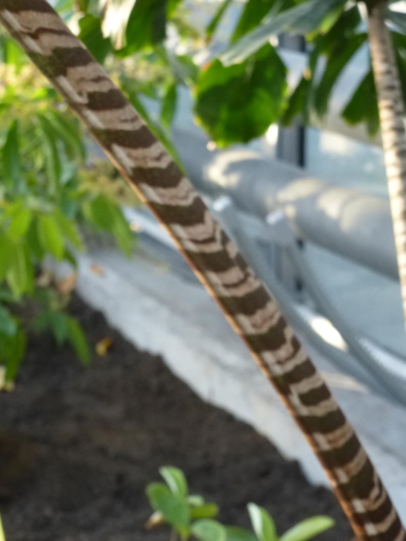 Magnifique palmier  P1290419