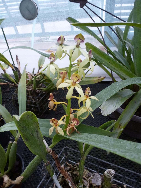 Quelques floraisons du moment  P1300914