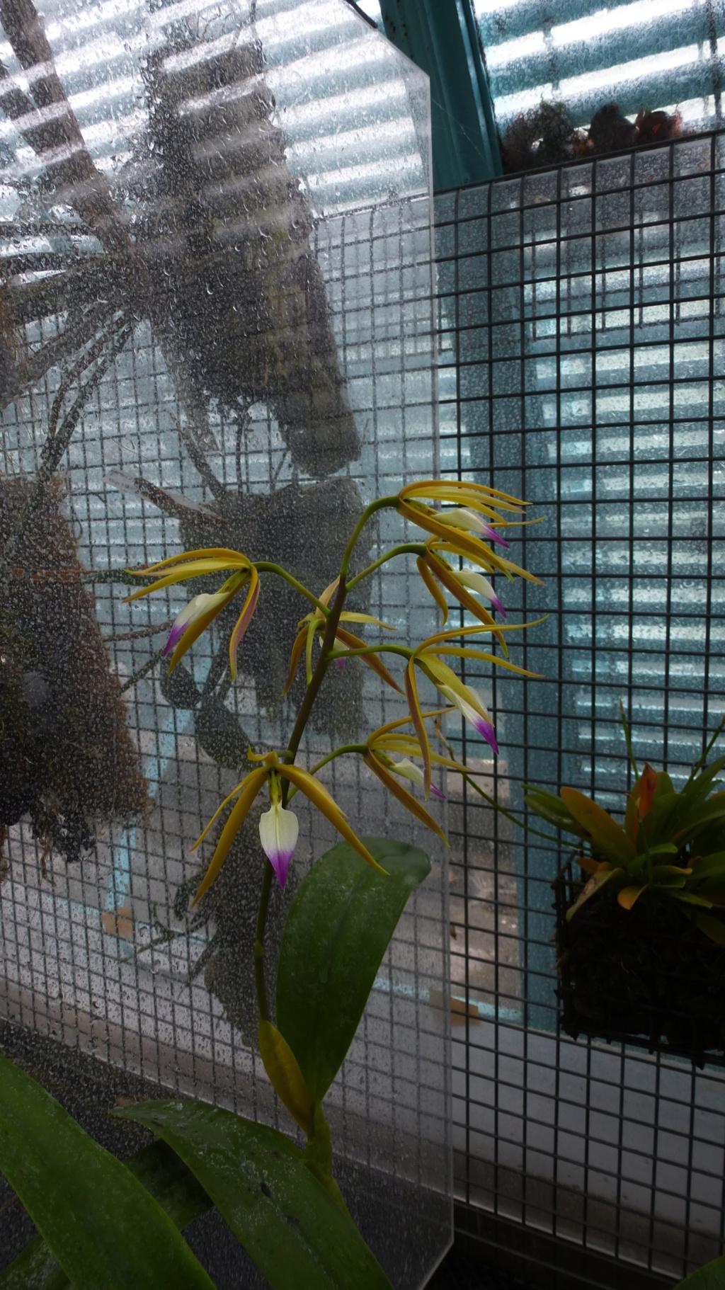 Quelques floraisons du moment  P1310013