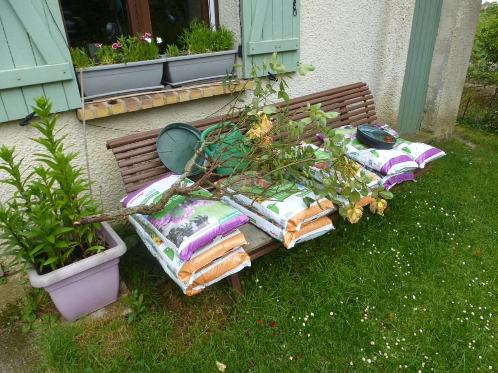 Mes plantes fidèles de mon jardin  P1310816