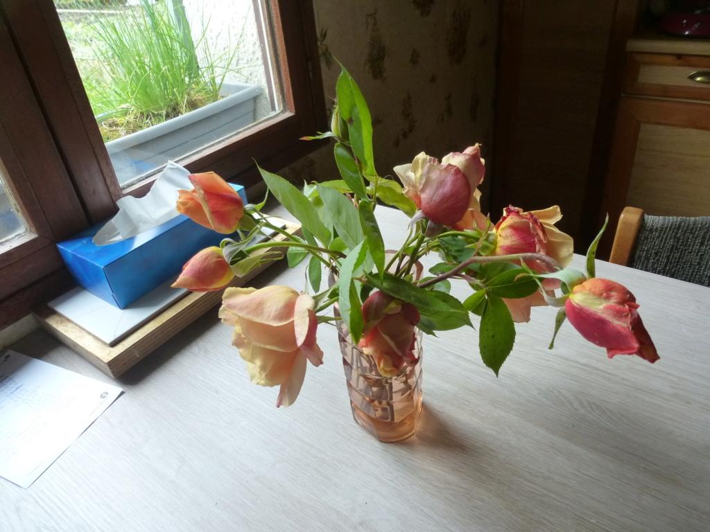 Mes plantes fidèles de mon jardin  P1310818