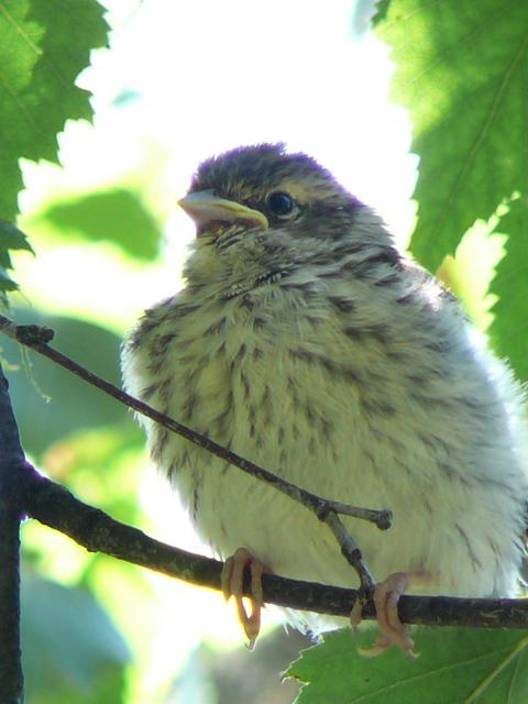 oiseaux à identifier P1120610