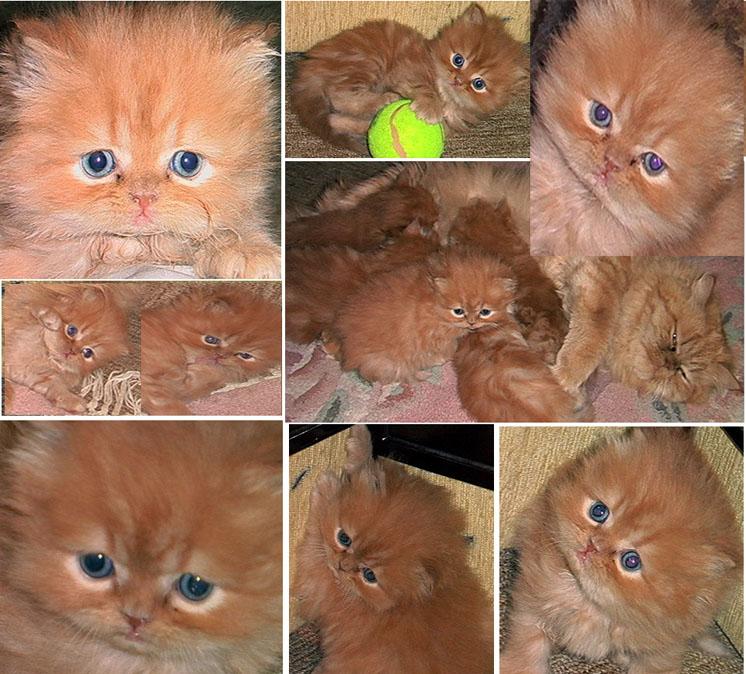 الي محبي القطط 1010
