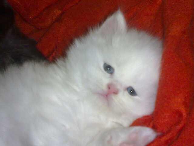الي محبي القطط 116