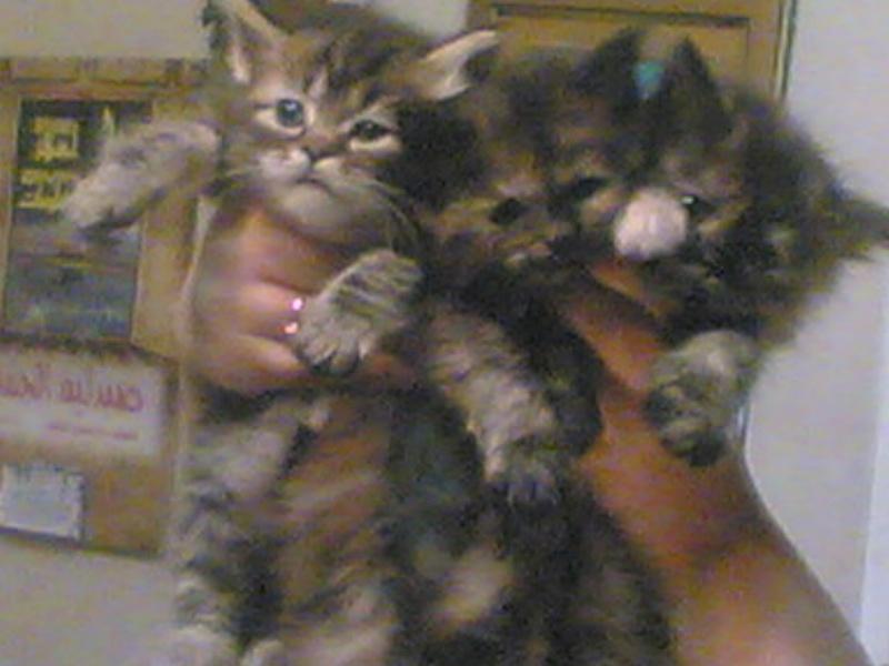 الي محبي القطط 213